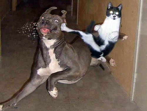 kick dog Social Media Fight   Pelea en las redes sociales